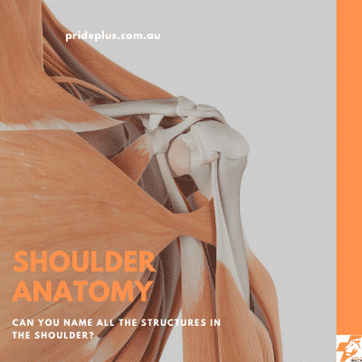 post shoulder surgery rehabilitation with a physiotherapist is needed here is the anatomy of the shoulder