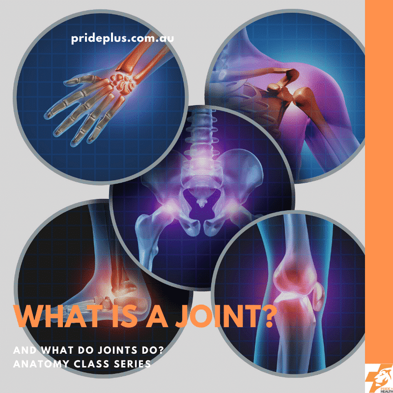 what is a joint and what do joints do