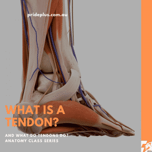 what is a tendon. what does a tendon do? we will teach you