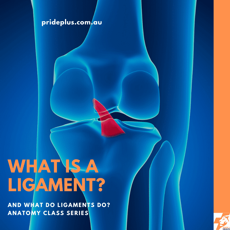what is a ligament and what do ligaments do?