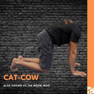 cat cow best physio exercises for lower back pain