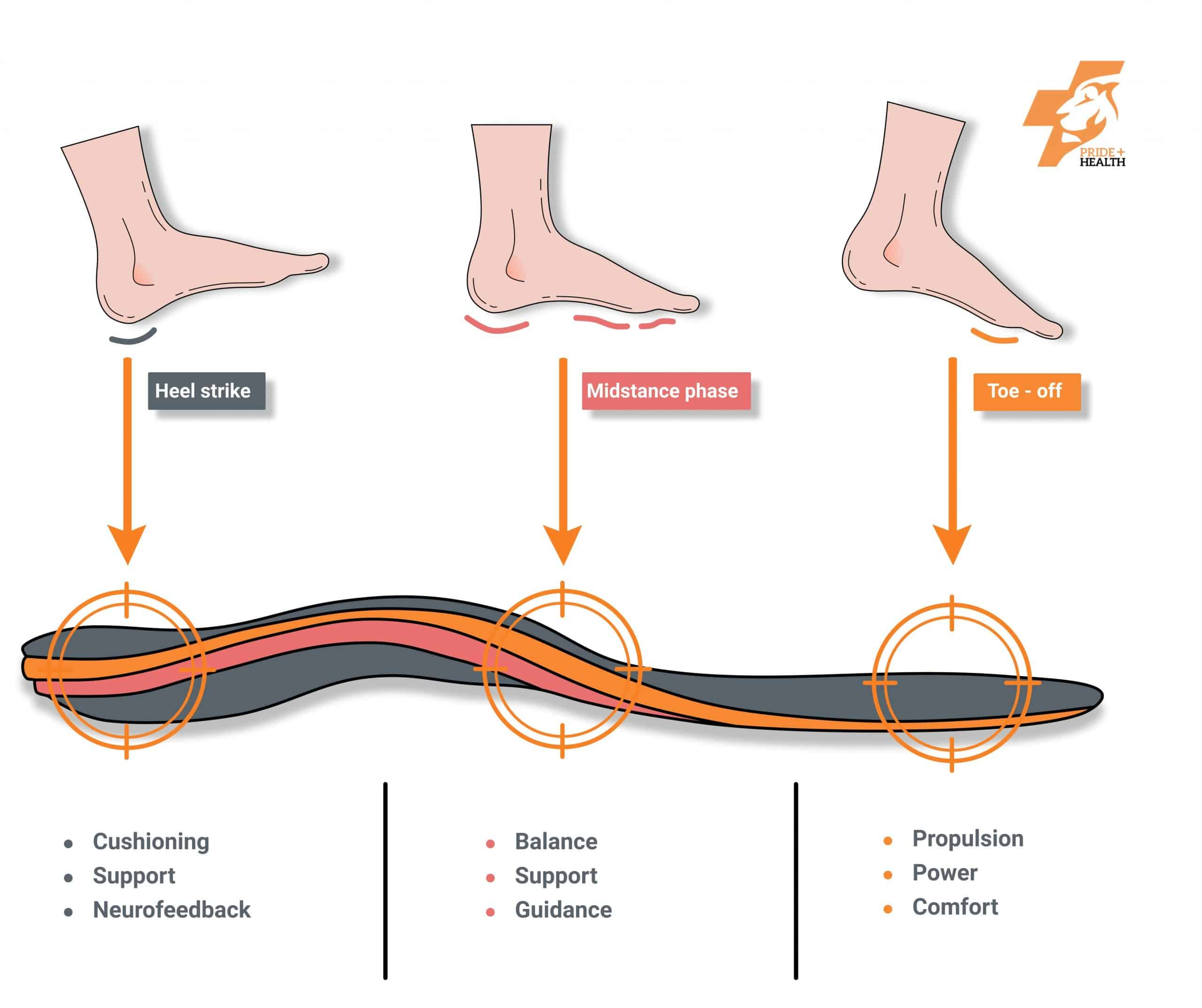 Orthotics work by providing different support at different parts of the gait cycle.